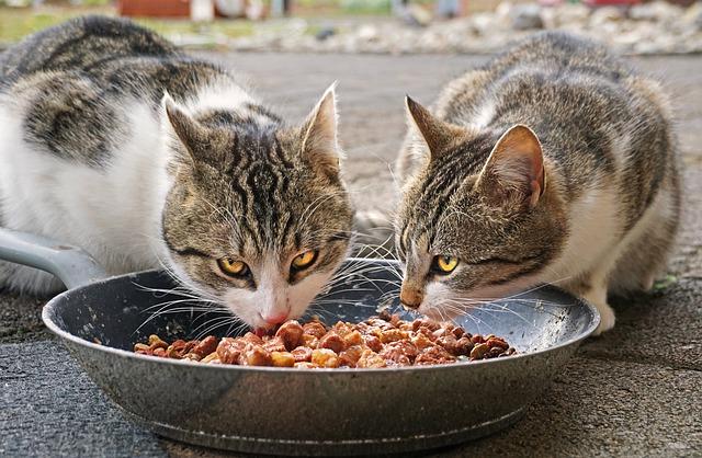 Jaką karmę dla kota wybrać